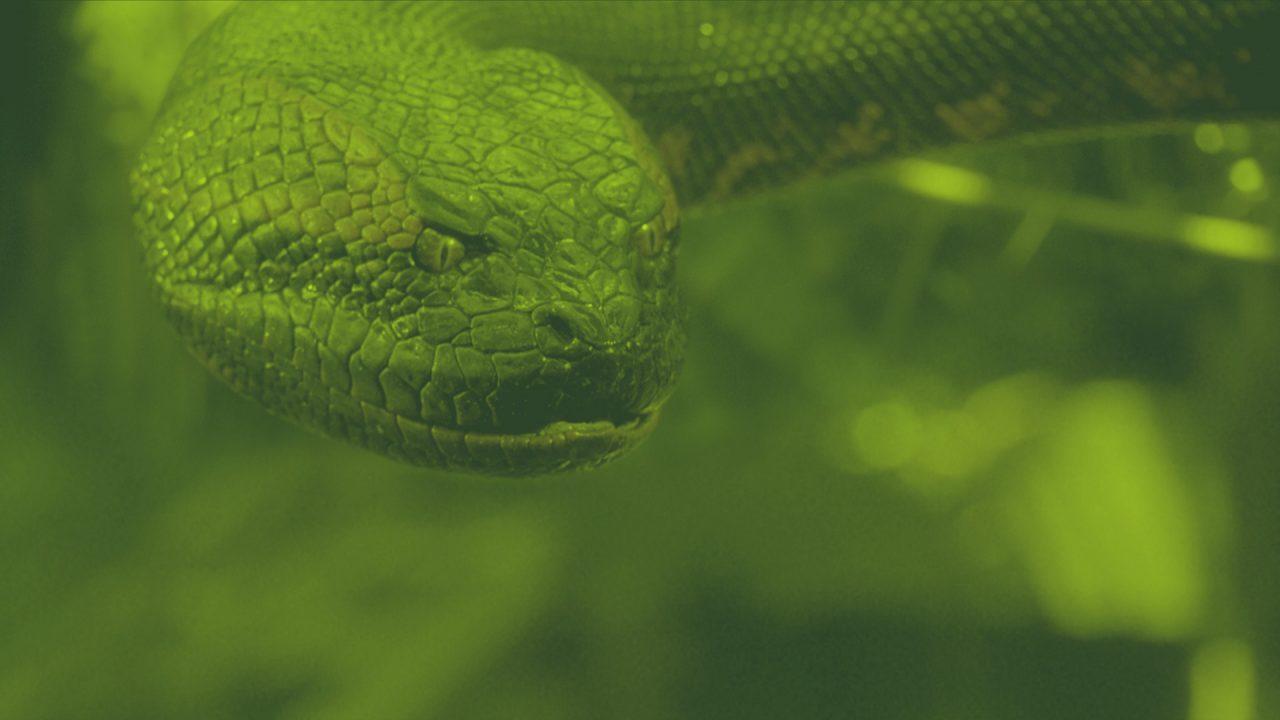Linha Quente #40: Anaconda 2